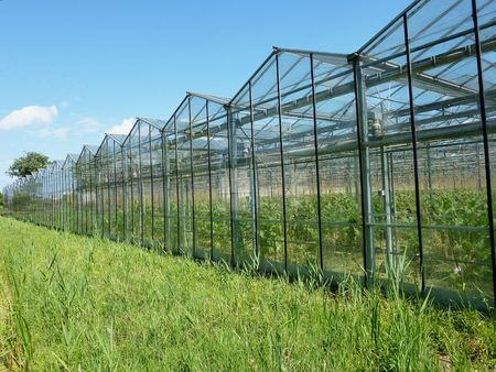 dampness: Glasshouses with vegetables