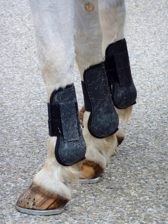 omnibus: The legs of a horse with horseshoes Stock Photo