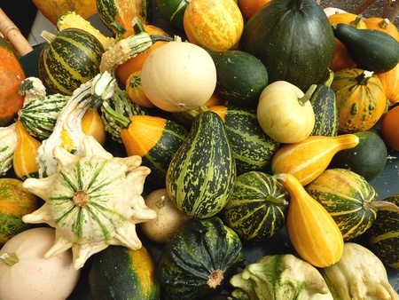Decorative pumpkins in autumnal colors in autumn Stock Photo - 10802751