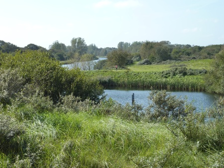 tree works: The dunes with the water works and supply for the city of Amsterdam in the Netherlands Stock Photo