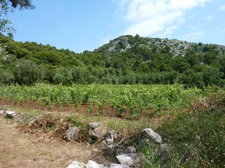 Small scale agriculture at the Croatian island Lastovo Stock Photo - 11072890