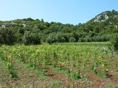 Small scale agriculture at the Croatian island Lastovo Stock Photo - 11072891