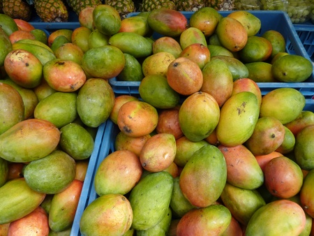 Colorful mango fruits with water drops at the greengrocery on the market place photo