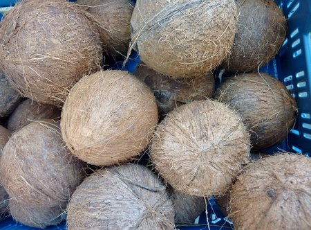 Coconuts in boxes at the greengrocer Stock Photo - 11408552