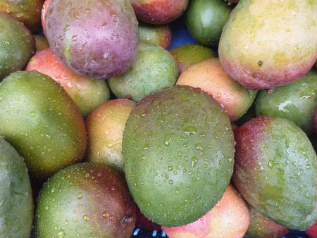 Mangoes Stock Photo - 11913163