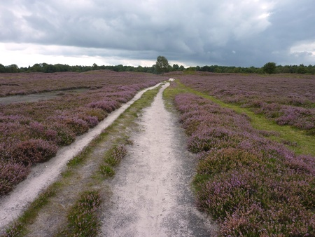 A trail on the heather fields in perspective Stock Photo - 12039120