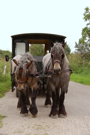 A carriage and pair of Belgium work horses Stock Photo - 11909416
