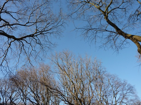 Barren branches of a tree opposite a blue sky in winter Stock Photo - 11884588