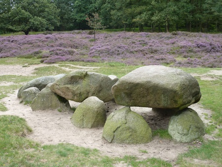 A megalithic tomb in the sand dunes with flowering heather near Gasteren in the Netherlands photo
