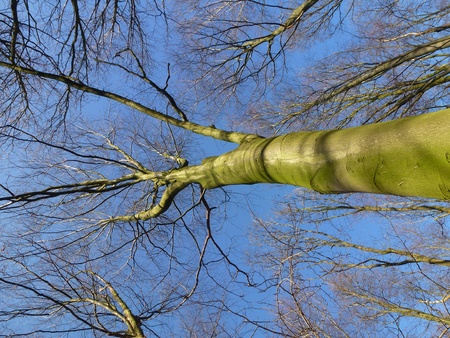Barren branches of a tree opposite a blue sky in winter Stock Photo - 12186469