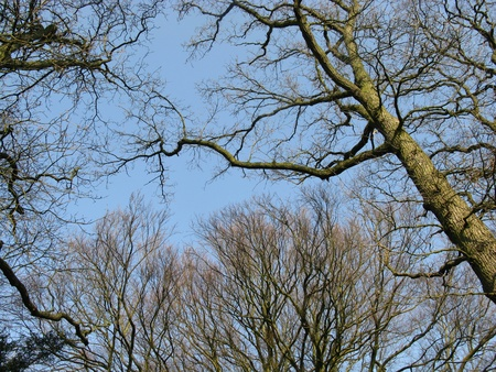 Barren branches of a tree opposite a blue sky in winter Stock Photo - 12186475