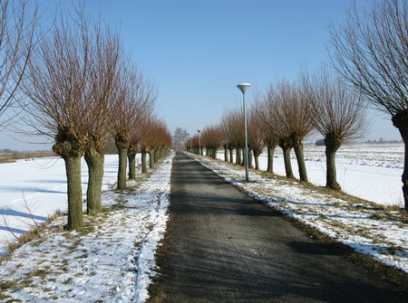 Willow trees along a road in winter photo