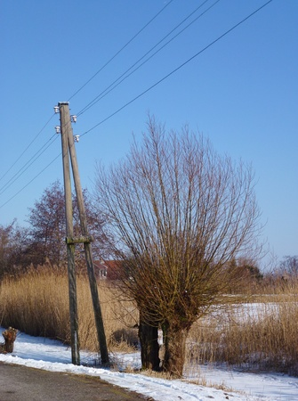 Aboveground electricity wires and a wooden A-pole in a winter landscape with willow trees photo