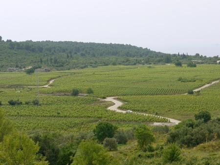 Panoramic view on the wine vineyards on the island Korcula in Croatia Stock Photo - 12327345