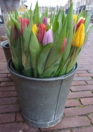 Bunches of colorful tulips in a bucket Stock Photo - 12378108