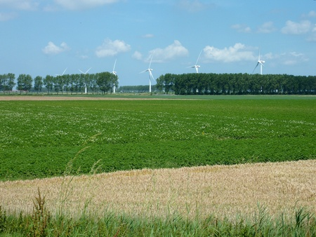A potaton and a wheat field in summer photo