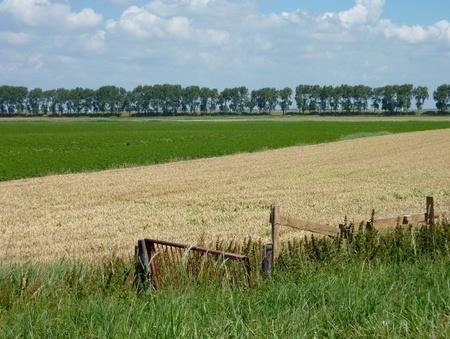 A rural landscape with a wheat field in the Netherlands photo