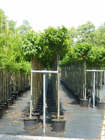 A tree nursery with young trees in plastic containers Stock Photo - 12506316