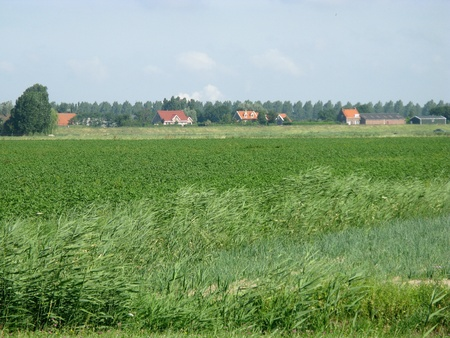 flakkee: A rural landscape with potato plants Stock Photo