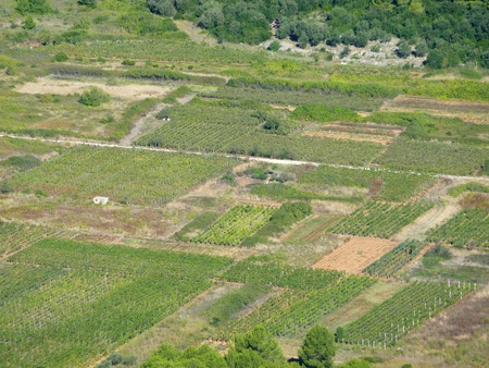 small scale agricultrure on the island Lastovo in Croatia photo