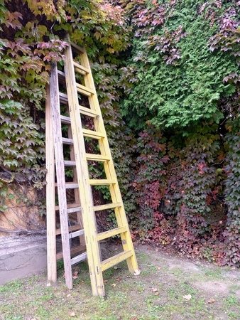 Three ladders in a garden with Virginian creeper in autumn colors photo