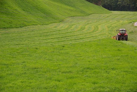 mowing grass: Mowing grass in summer Stock Photo