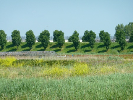 dikes: Wild flowers in a field and trees with shadows on the dike
