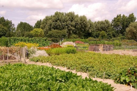 An allotment garden with flowers and vegetables