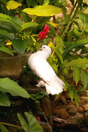 A White Dove The Symbol For Peace Stock Photo Picture And Royalty