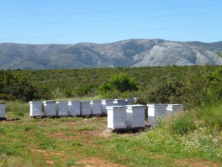 Beehives on a Croatian island photo