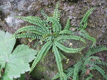 A fern in the forest  photo