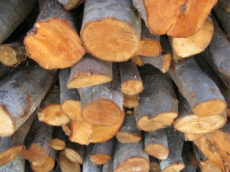 Holm oak wood for the fire place Stock Photo - 14421203