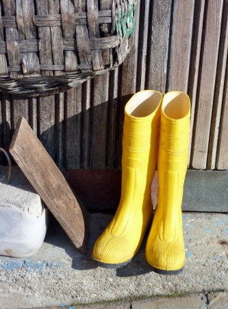 Yellow garden boots photo