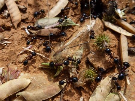 ameisenhaufen: Ameisen bauen an ihrem Nest
