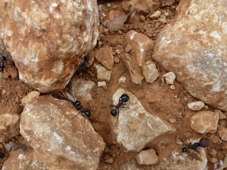 Ants building at their nest photo