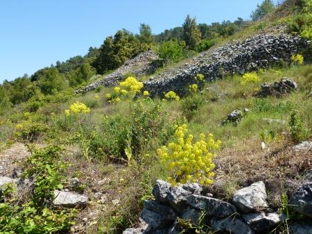 drystone: Dry stone walls and yellow flowers  in the hills of the island Vis in Croatia Stock Photo
