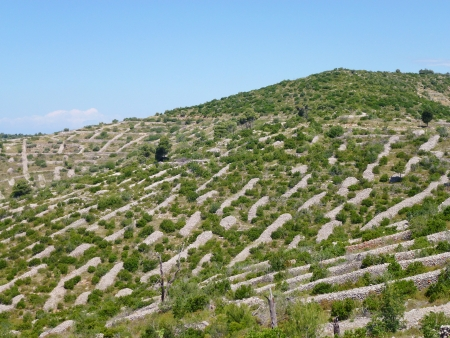 Dry stone walls on the island Hvar in the Adriatic sea of Croatia photo