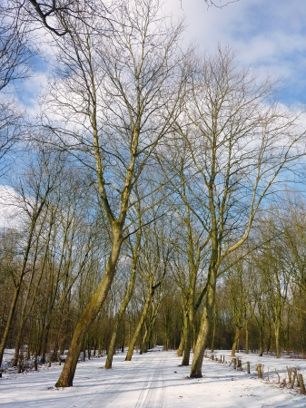 A trail with snow in the Bieslandse forest in South Holland photo