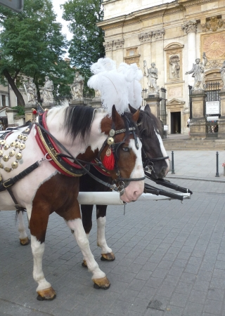 A carriage and pair with white plumes in Krakow in Poland photo