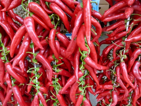 Strings of red peppers Stock Photo - 16412124