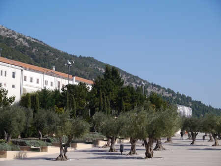 Olive trees on the square of the church of saint Pio from Pietrelcina in San Giovanni rotondo in Apulia in Italy