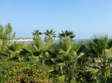 foggia: Several palm trees at the coast of Gargano in Viesta in Italy Stock Photo
