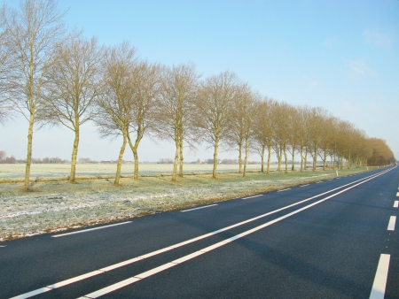 The road and trees in perspective Stock Photo - 16635083