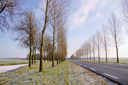 A winter landscape with a road and trees in perspective Stock Photo - 16635114