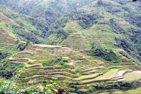 Rice cultures on terraces in the mountains of Banau in Luzon in the Philippines Stock Photo - 16644961
