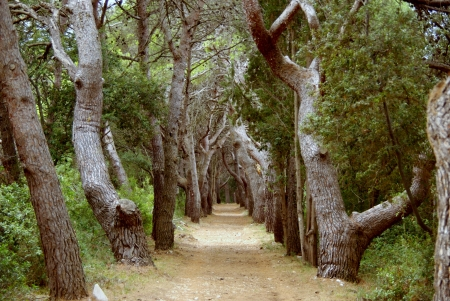 A footpath in the forest of Veli Rat on Dugi Otok in Croatia Stock Photo - 16839510