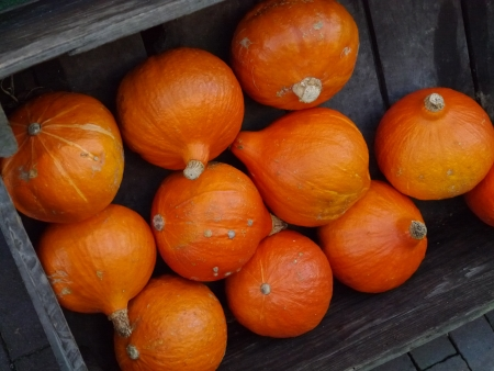 Orange pumpkins in a box at the greengrocer on the market place photo