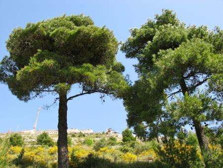 shure: The hills above Dubrovnik in Croatia Stock Photo