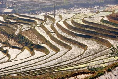 Rice fields on terraces near Sapa in Vietnam Stock Photo - 17259124