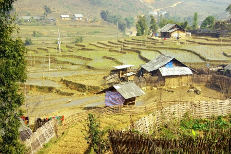 Rice cultures on terraces in the mountains near Sapa in Vietnam Stock Photo - 17266918